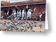 Flight Of Pigeons Inside The Jama Masjid In Delhi Greeting Card