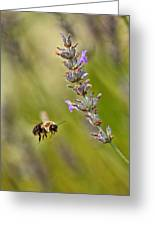 Flight Of The Bumble Greeting Card