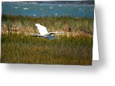 Flight Of The Egret Greeting Card