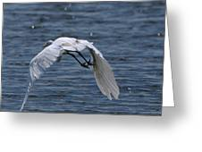 Flight Over The Lake 3 Greeting Card
