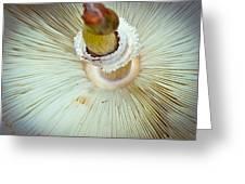 Flippin Shroom Greeting Card
