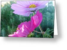 Flirty Cosmos Greeting Card by Judyann Matthews