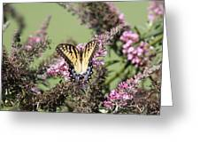 Flitter - Butterfly - Swallowtail Greeting Card