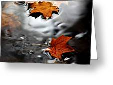 Floating Maple Leaves Greeting Card