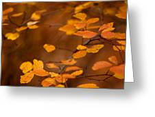 Floating On Orange Fall Leaves Greeting Card
