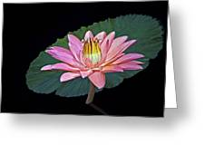 Floating Water Lily Greeting Card