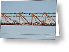 Flock Of Birds Perching On Construction Crane Greeting Card