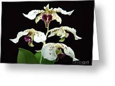 Flock Of Dendrobium Greeting Card