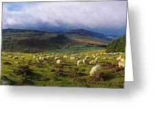 Flock Of Sheep Grazing In A Field Greeting Card