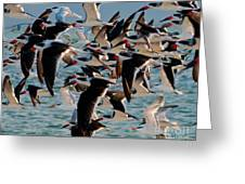 Flock Of Terns Greeting Card
