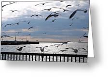 Flocking Gulls Greeting Card