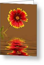 Flooded Beach Flower Greeting Card