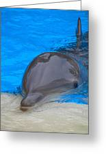 Published Secret Lives Dolphins Greeting Card