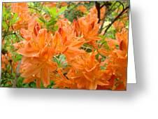 Floral Art Prints Orange Rhodies Flowers Greeting Card