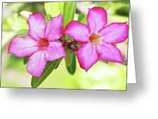 Floral Background. Desert Rose. Greeting Card