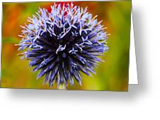 Floral Colors Greeting Card