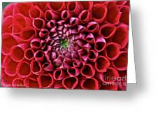 Floral Honeycomb Greeting Card