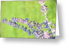 Florets Greeting Card