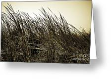 Florida Everglades 6 Greeting Card