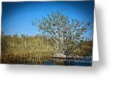 Florida Everglades 8 Greeting Card