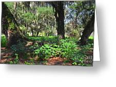 Florida Forest Greeting Card