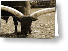 Florida Longhorn Greeting Card