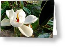 Florida Magnolia Greeting Card