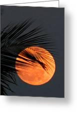 Florida Moonrise Greeting Card