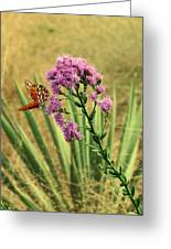 Florida Paintbrush Greeting Card
