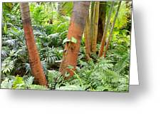Florida Palms And Ferns Greeting Card