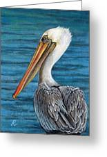 Florida Pelican Greeting Card by Peggy Dreher