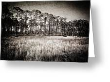 Florida Pine 2 Greeting Card