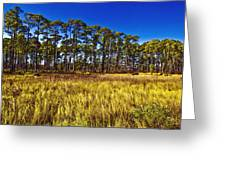 Florida Pine 3 Greeting Card