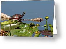 Florida Redbelly Turtle Greeting Card