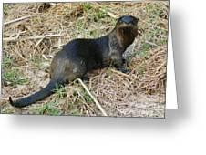 Florida River Otter Greeting Card by Lynda Dawson-Youngclaus