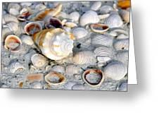 Florida Shells Greeting Card