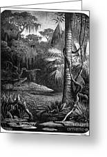 Florida: Swamp Greeting Card