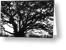 Florida Tree Greeting Card