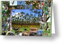 Florida Wildlife Photo Collage Greeting Card