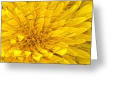 Flower - Dandelion Greeting Card
