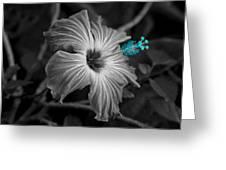 Flower 1 Greeting Card
