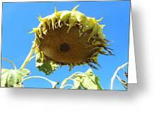 Flower 38 Greeting Card