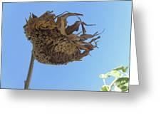Flower 39 Greeting Card