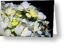 Flower 75 Greeting Card