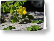 Flower And Dancing Clover Greeting Card