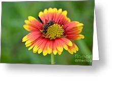 Flower And Insect  Greeting Card