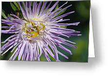 Flower And Spider Greeting Card