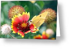 Flower Butterfly Greeting Card