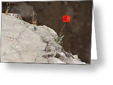 Flower By The Pool Of Bethesda - Israel Greeting Card