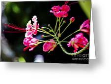 Flower Digital Painting Greeting Card
